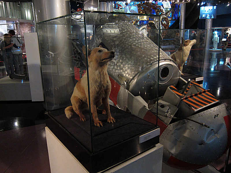 16_Belka_and_Strelka_in_the_Cosmonaut_Museum.jpg